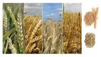 agriculture pellets