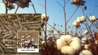 cotton stalk pellet