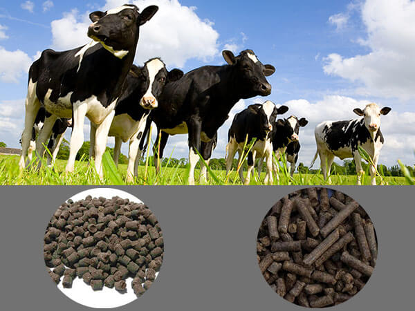 Making Cow Dung into Pellets