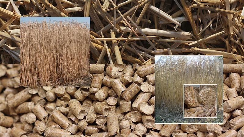 Miscanthus wood pellet