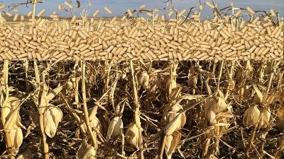 corn stalk pellet
