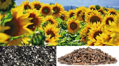 sunflower husk wood pellet